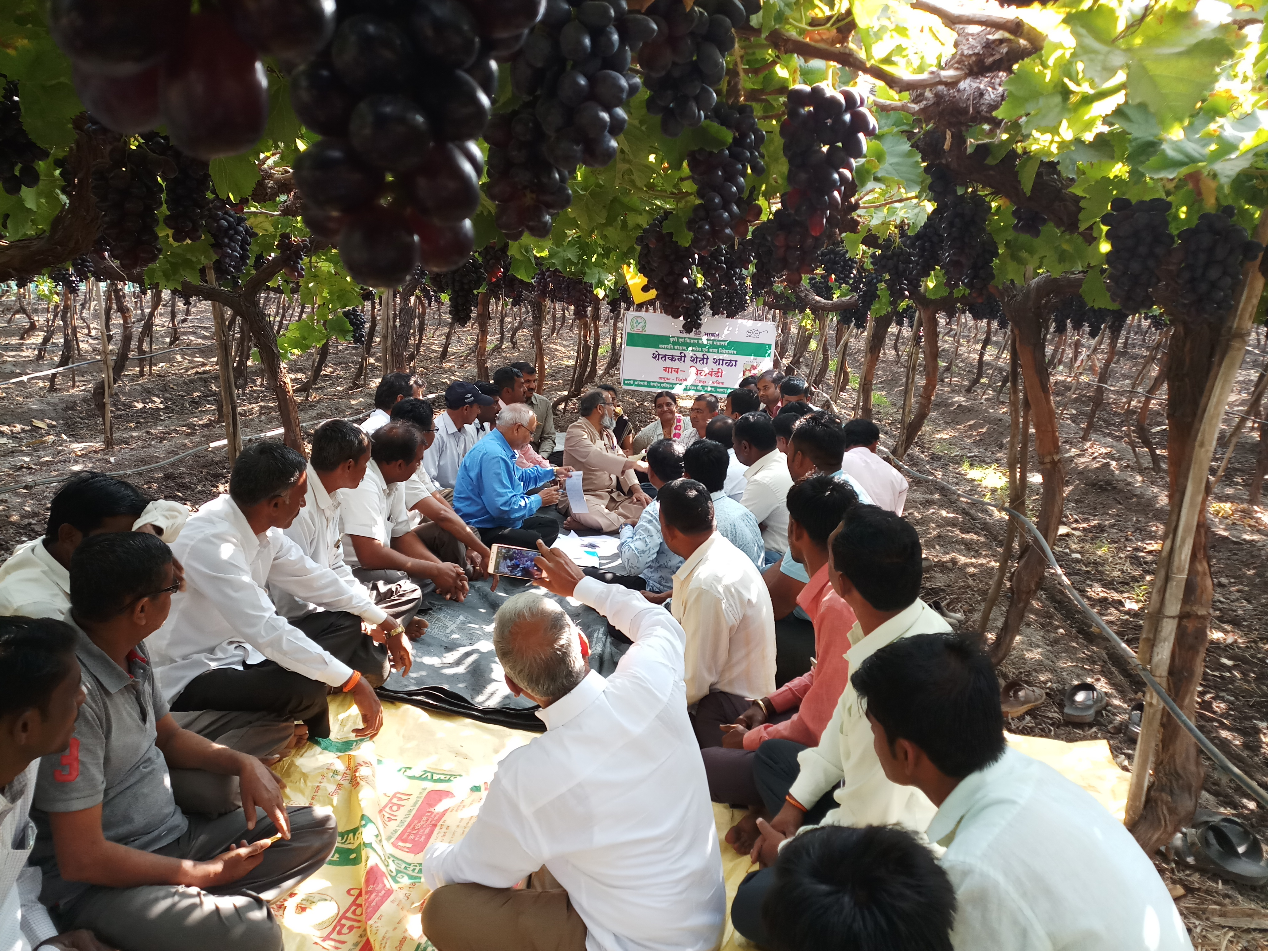 Dr. M. Aziz, IAS, MD of NHB visited FFS plot on Grapes