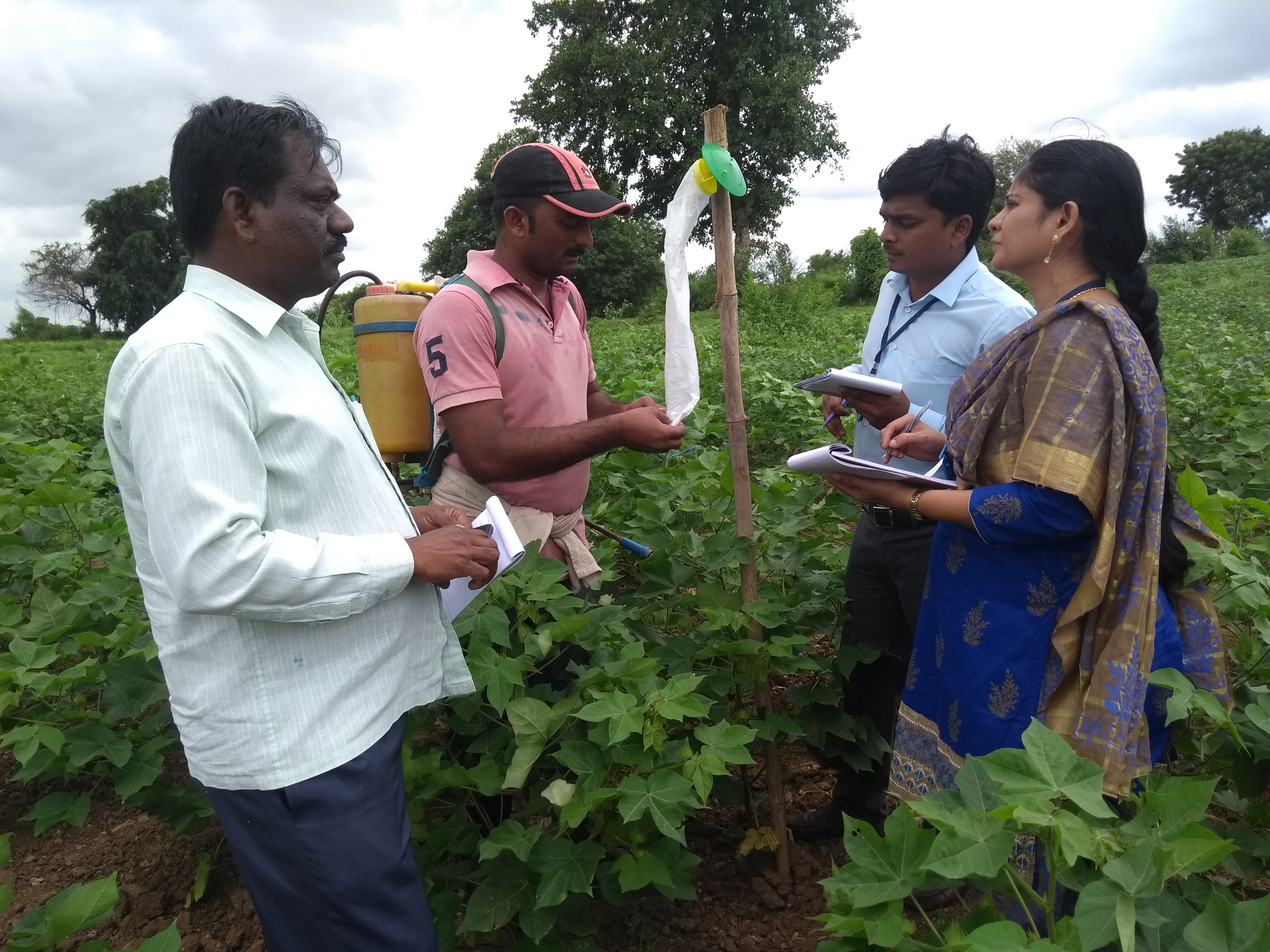 Special survey on PBW in Cotton - Adilabad district, Telangana State