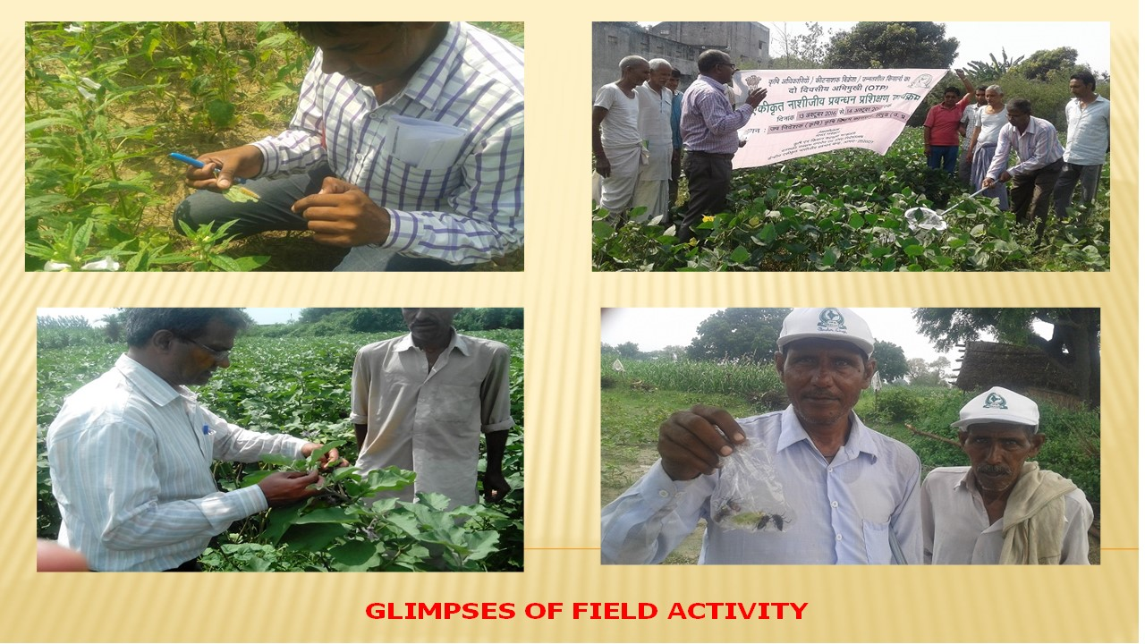 Glimpses of Field Activity