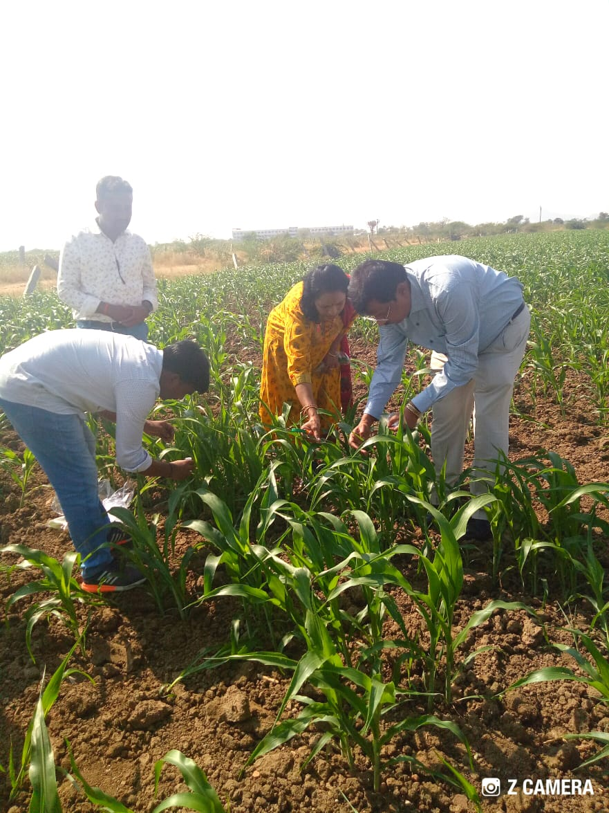 Special Survey on FAW in Jowar along with Dr. N. Satyanarayana, JD (PP), IPM Division