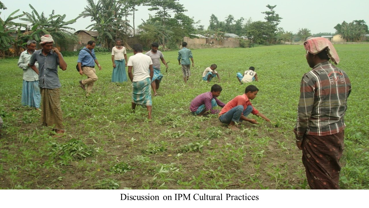 Discussion on IPM cultural practices