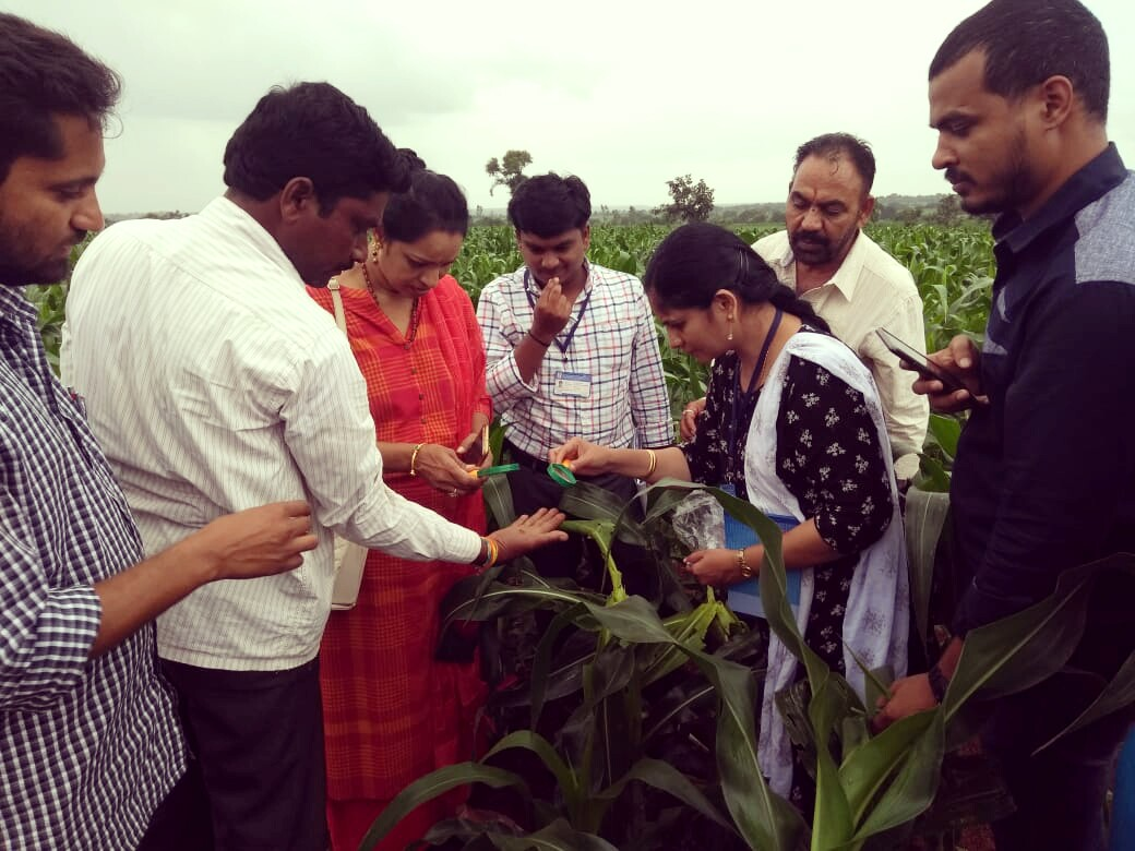 Hyderabad staff conducting Special surveys on Fall army worm in Maize