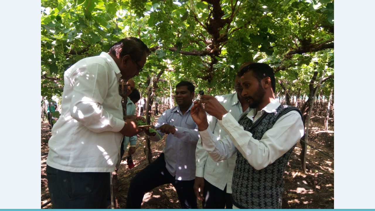 2 days training on grapes