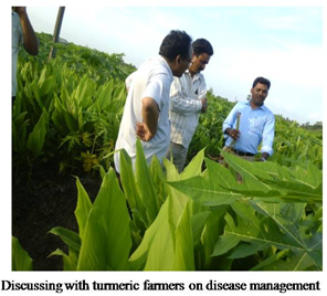 Discussing with Turmeric