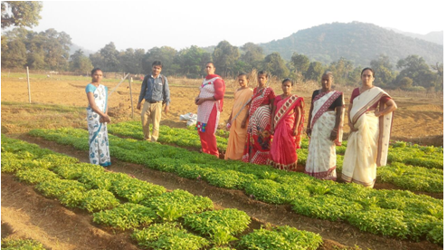 Farmers Field School conducted by CIPMC, Ranchi