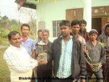 Distribution of Neem Sapling to the farmers