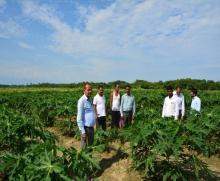 Survey for pest and diseases in Papaya Plantation