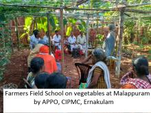 Farmer field school