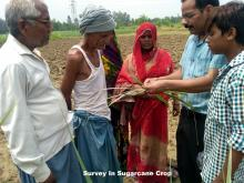 Survey In Sugarcane Crop